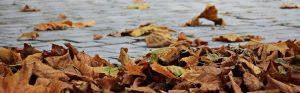 autumn-1685924-960-720